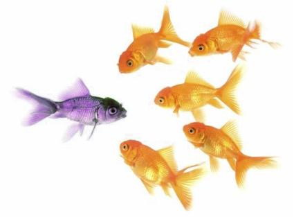 Waarin onderscheiden wij ons van alle anderen?